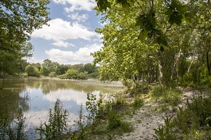overgrown lake