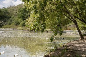 large lake with trees