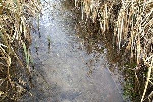 Stream Flowing through meadow, clean water