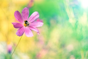Colorful summer background with flower and bumblebee. Delicate pastel colors, place for text.