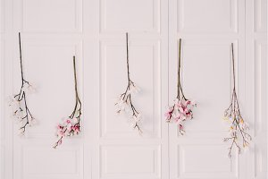 blossoming tree branches on the white wall of the house