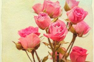 Roses bouquet.