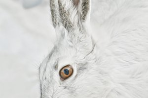 Jackrabbit portrait TWO