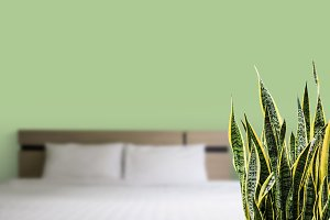Snake plant in the bedroom