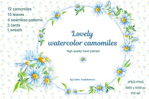 Lovely watercolor camomiles.