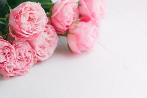Pink roses over white background