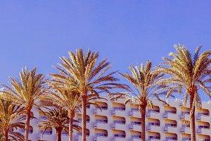 Tropical vintage mood. Palms.
