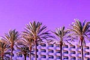 Tropical purple mood. Palms
