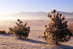 Winter sunset scenery