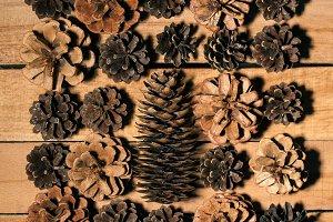 Cones on a wooden Board