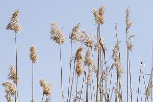 marsh grass.