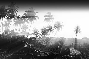 Dramatic light rays through the palm trees backdrop