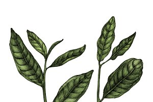 Illustration of Leave