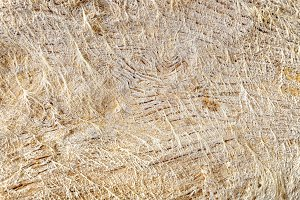 Saltpeter over old wood