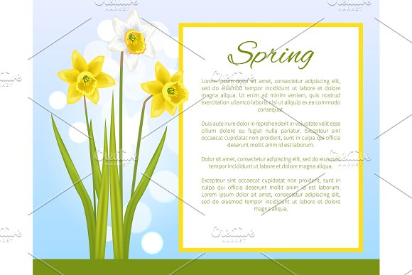 Spring Flower Poster With Text Daffodil Narcissus