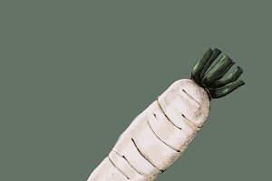 Illustration of Raikon Radish vegeta