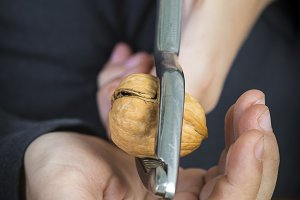 Child cracking walnuts