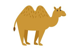 Camel. Cartoon vector caravan camel character on white
