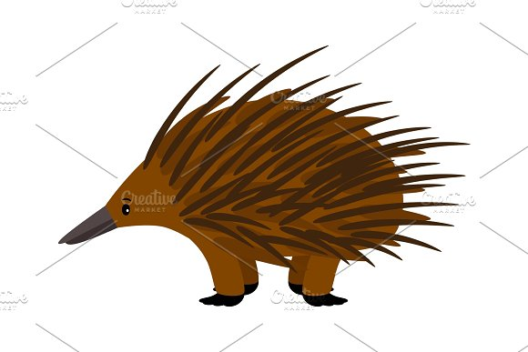 Echidna Cute Vector Echidna Character On White