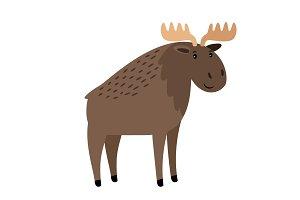 Moose. Cute vector elk with large horns on white, vector single antlered moose