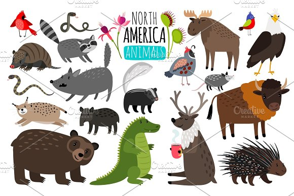 North American Animals Animal Graphics Of North America American Bison And Skunk Cute Moose And Lynx