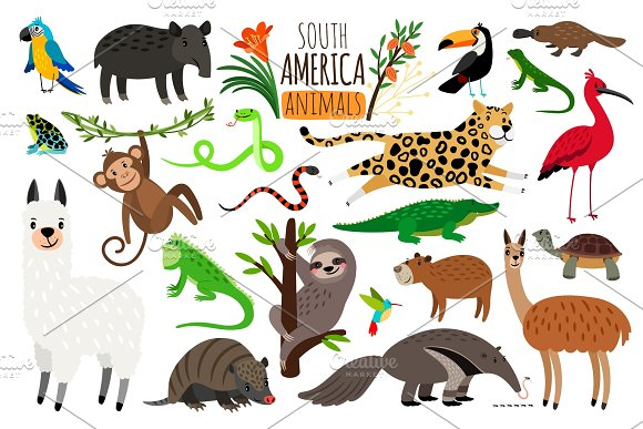 South America Animals Vector Cartoon Guanaco And Iguana Anteater And Ocelot Tapir And Armadillo On White