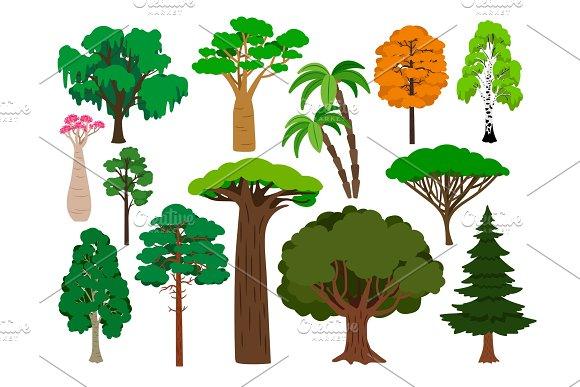 Cartoon Trees Vector Green Tree Set Brachychiton And Rowan Palm And Willow Maple And Poplar