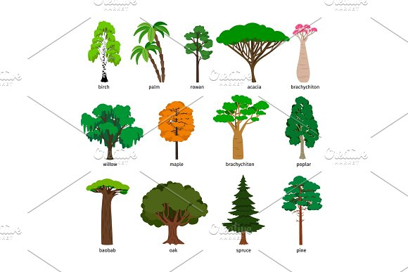 Vector Trees Forest Tree Set With Titles Birch And Oak Pine And Baobab Acacia And Spruce Vector