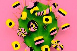Candy Cactus. Fashion Candy minimal