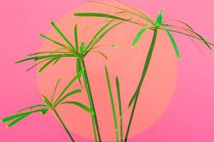 Hot palms