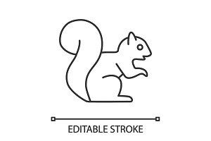 Squirrel linear icon