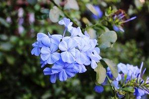 Flower - 4