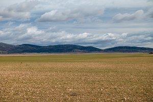 Desert field