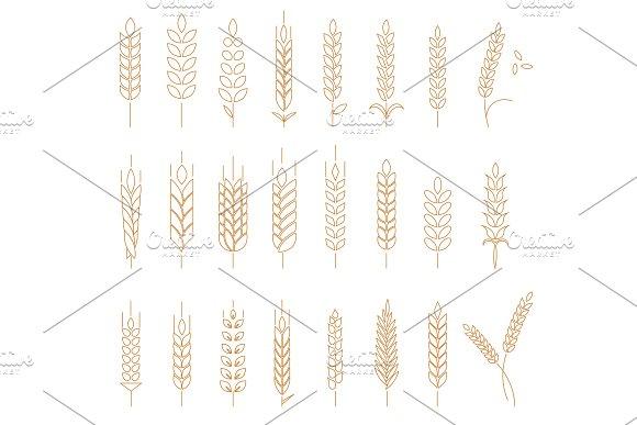 Wheat Rye And Barley