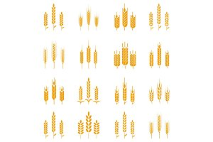 Wheat ear symbols for logo design.