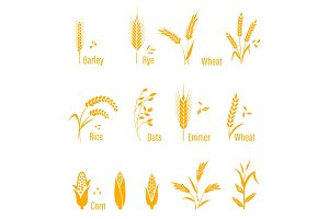 Wheat ears or rice icons set. Agricultural symbols isolated on white background.