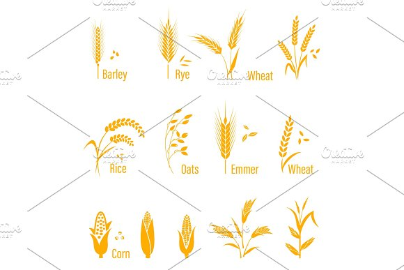 Wheat Ears Or Rice Icons Set Agricultural Symbols Isolated On White Background