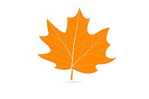 Autumn vector orange leaf.