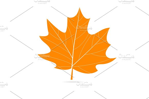 Autumn Vector Orange Leaf