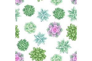 Seamless pattern with succulents. Echeveria, Jade Plant and Donkey Tails