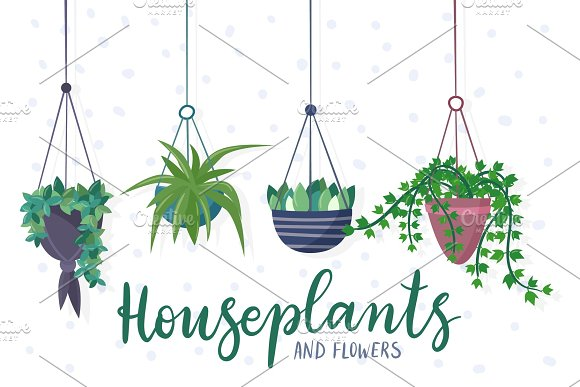 Hanging House Plants And Flowers In Pots
