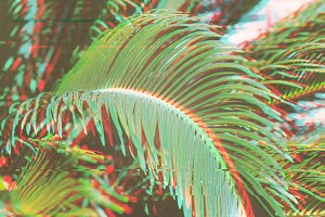 Surreal palm leaves background
