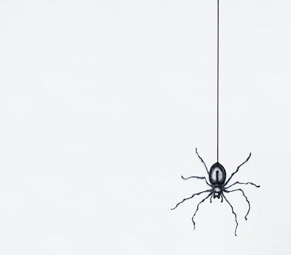 Sketch Of A Black Spider