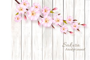 Nature sakura background. Vector