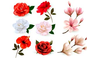 Set of a beautiful flowers. Vector