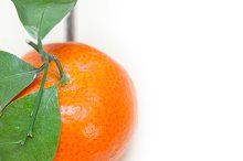 blueberry and tangerine orange 007.jpg