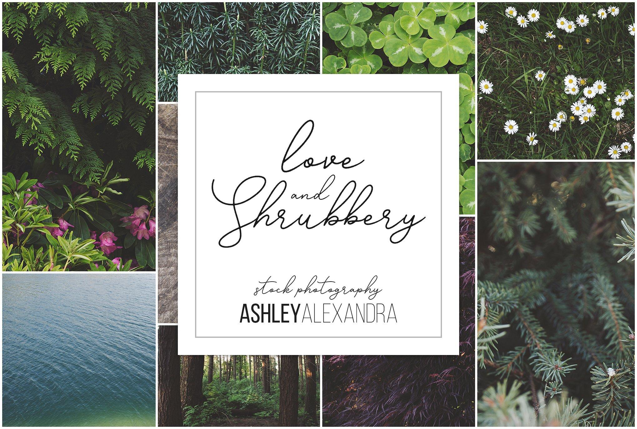 Love & Shrubbery Insta Bundle ~ Instagram Templates ~ Creative Market