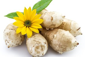 Jerusalem artichoke on a white