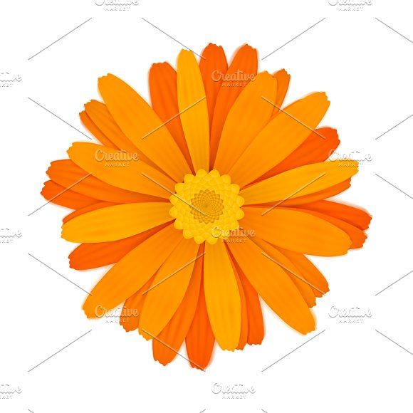 Bright Orange Gerbera Flower