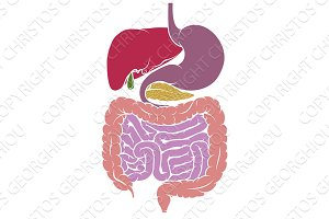 Human Anatomy Digestive System Tract Diagram